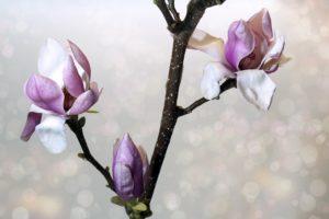 menstrual-cycle-spring-lebensgut-verlag