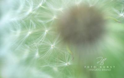 Die einzigartige Schönheit unserer Natur (Teil 2)