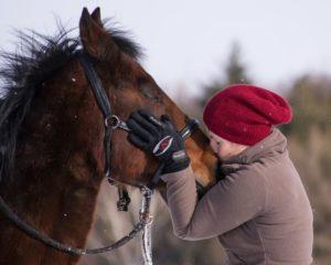 tierkommunikation-mensch-pferd