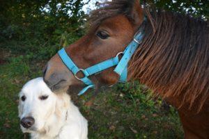 tierkommunikation-pferd-hund